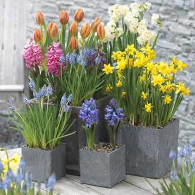 Bulbs are easy spring container garden project for Spring bulb garden designs