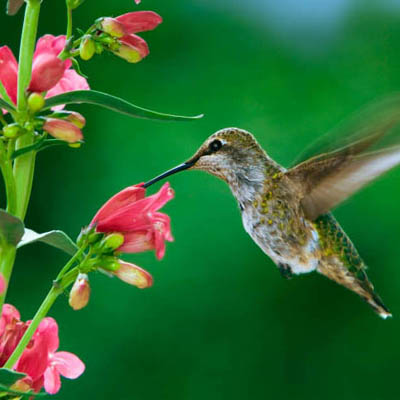 Bulbs are Easy Hummingbird Garden Project bulbsareeasycom