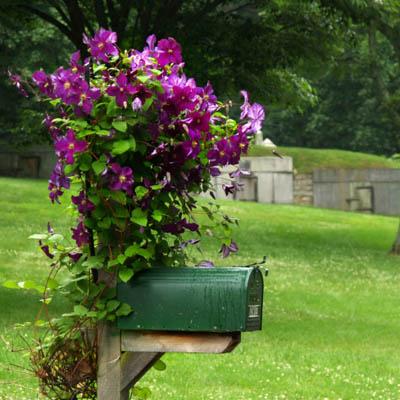 Mailbox Garden Project Convallaria ...